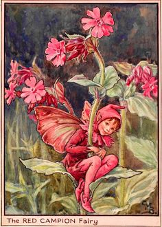 The Red Campion Fairy - Flower Fairies of the Wayside