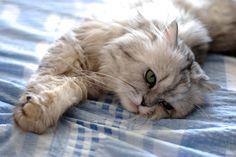 Los gatos tienen fama de ser insensibles, arrogantes y egoístas, pues a diferencia de los perros, no demuestran afecto o siempre están…