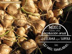 México tiene una producción anual de jícama que supera las 187 mil toneladas. SAGARPA SAGARPAMX #SomosProductores