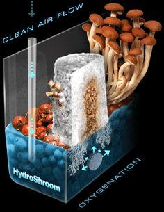 Spores Mushroom Spores Grow Kits mushroom spores syringes psilocybe mushrooms syringes edible mushroom prints or spore syringes or mushroom grow kits > HydroShroom Mushroom Growing System