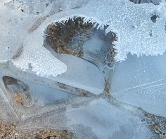 ICE CRYSTALS AND FLOWER- A STUDY IN ICE- FROM A PHOTO BY MY SISTER ROBIN WILLIAMS- CREATED BY ELLEN BOUNDS