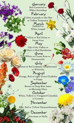 Discover the birth month flowers and flower meanings here! Discover the birth month flowers and flow Birth Month Flowers, September Birth Flower, April Flower, August Flower Tattoo, Flowers For Each Month, October Flowers, Flower Of May, December Birth Stone, August Birth Month Flower