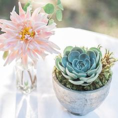 This arrangement by @colonialhouseofflowers featuring our apothecary bottle (on the left ) feels like goodbye spring, hello summer! #succulents
