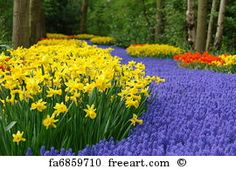 Spring Flower Bed In Keukenhof  - Art Print