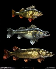 Fish Art - Fish illustrations that I did for a known fishing tackle brand called Savage Gear. The illustration - Pike Fishing, Fishing Tackle, Fishing Tips, Bass Fishing, Fishing Stuff, Archery Equipment, Kunst Poster, Bowfishing, Fish Paintings