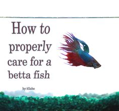 How to Properly Care for a Betta Fish This instructable will teach you how to properly care for a betta, a beautiful and hardy fish ideal for the beginner. And unlike other ornamental fish-related instructables, this one will actually give you legitimate facts about bettas that will allow your betta to thrive.