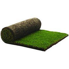 Rolawn Medallion Grass Turf Roll 1m2
