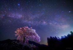 キャプション→The beauty of Kagaya-san's art will forever remain inside my heart. Beautiful Places In Japan, Beautiful Sky, Beautiful Pictures, Japan Landscape, Landscape Photos, Sans Art, Sky Photos, Cherry Tree, Night Skies