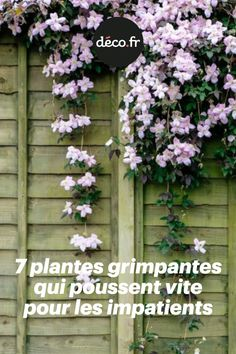7 climbing plants that grow quickly for the impatient Beautiful Flowers Garden, Most Beautiful Gardens, Pergola, Garden Paths, Garden Landscaping, Decoration Plante, Garden Markers, Green Life, Permaculture