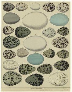 various dinosaur eggs
