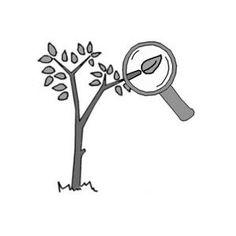 Problem Tree Analysis   SSWM