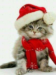 lustige gifs mit katzen lustige weihnachts katzen. Black Bedroom Furniture Sets. Home Design Ideas
