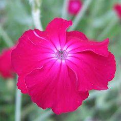 pinksonly