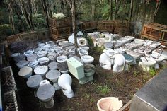 Toilets in the bush  When I was way back in the bush botanising and checking out where that creek came from, was really surprised to find a plot of toilets. They are surrounded by a fence of crayfish-Lobster-pots that keeps out roaming stock. I particularly like the green one which had a cistern also made of porcelain. I love living in Totara North......