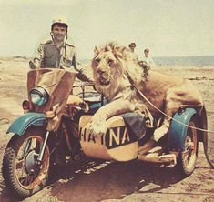 Sidecar lion
