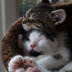animals sleeping together 1 272x273
