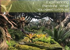 What You Need to Know Before Experiencing the Attractions in Pandora! - Travel With The Magic Disney Planning, Trip Planning, Girls Vacation, Adventures By Disney, Disney Cruise Line, Disney Vacations, Disney Magic, Walt Disney World, Need To Know