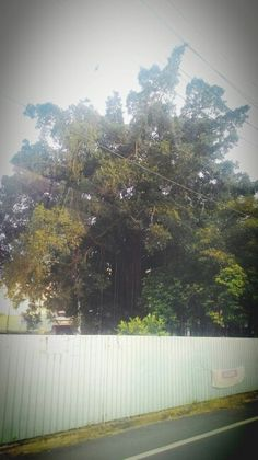 108:0417路上的大樹