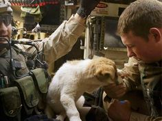 A Heartwarming Salute to Soldiers and Their Hero Dogs | Reader's ...