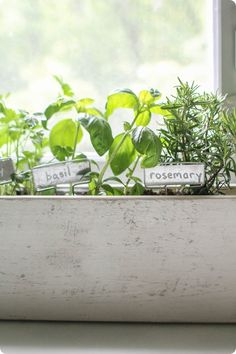 How to plant a simple indoor herb garden. With tutorial for simple planter box.