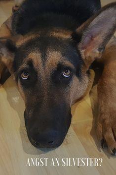Silvester ist mit dem Feuerwerk für viele Hunde Stress pur!