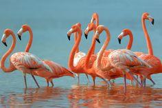 flamingo desktop wallpaper hd wallpapers