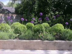 Secret garden in Oxfordshire Charlotte Rowe Garden Design