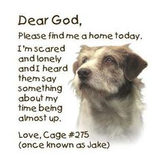 Jake needs love and a warm bed. He deserves a second chance. Please feed him!