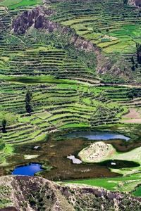 Colca Valley Overnight Tour from Arequipa: Colca Canyon, Vicuna Reserve and Condors #colcacanyon #arequipa