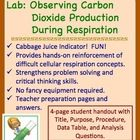Lab: Using Cabbage Juice to Observe CO2 Production in Cell Respiration