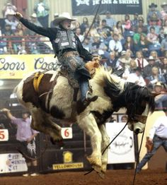 Cort Sheer is bucked by his horse during the saddleback riding event at the final event of the 2014 San Angelo Stock Show and Rodeo.