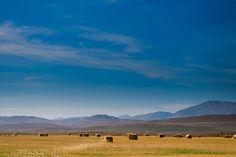 Southern Alberta Farmland – Rich in Rewards