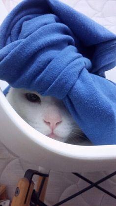 Esconde esconde