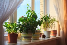 4 Plants To Have In Your Home To Make You Happier