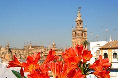 El Hotel Boutique Casas de Santa Cruz está situado en el centro de Sevilla, dentro del conjunto monumental declarado Patrimonio de la Humanidad, Catedral, Giralda, Real Alcázar y Archivo de Indias, en el barrio de Santa Cruz, el barrio con más encanto de Sevilla.