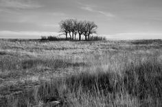 Featured artist, Larry Dean,San Luis Valley, Colorado