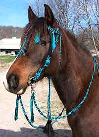 Hand-braided rope headstalls  the best of old and new  in one practical work of art
