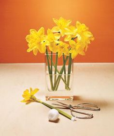 Help hollow-stemmed blooms, like daffodils, delphiniums, and amaryllis, soak up water and stay hydrated longer with this fresh idea: Cut the bottom of each stem at a 45-degree angle, turn the stem upside down, fill it with water, and stuff it with a piece of cotton.