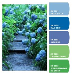 Blue and Green Flower Garden colors: hydrangea+leaves+path, my living room color palette Green Paint Colors, Green Colour Palette, Colours, Colour Schemes, Color Combos, Creative Colour, Design Seeds, Colorful Garden, Color Blending