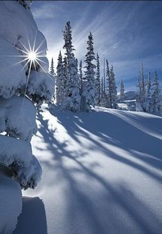 a splendid blanket of soft white with long shadows from tall trees