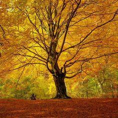 El árbol de oro. Foto de @santimb en el Nacedero del Urederra / Sierra de Urbasa. #Navarra