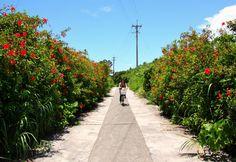 【久高島】ハイビスカスが咲く島の道