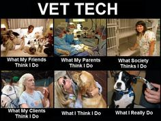Except that any vet tech worth her salt will tell you those ear thermometers are inaccurate. Just sayin'.