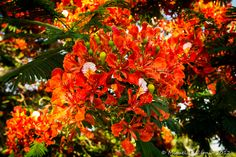 Photograph Bunch of orange flowers by Miguel Alfonso on 500px.