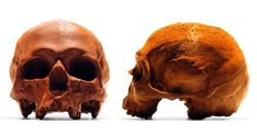 Edible Anatomically Accurate Chocolate Human Skulls  http://www.thisiscolossal.com/2014/07/edible-anatomically-accurate-chocolate-human-skulls/