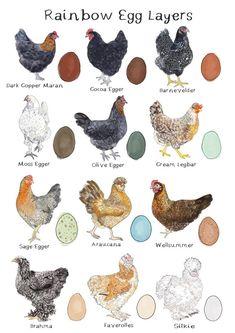 Chicken Garden, Chicken Life, Backyard Chicken Coops, Chicken Coop Plans, Chicken Art, Diy Chicken Coop, Chicken Eggs, Chickens Backyard, Chicken Animal