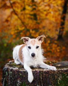 Dog Photography, Switzerland, Corgi, Autumn, Animals, Instagram, Fall, Animaux, Corgis