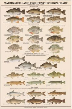 Warmwater Game Fish Identification Poster