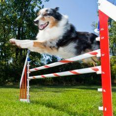 amazon com namsan dog outdoor games pet training jump hoop dog