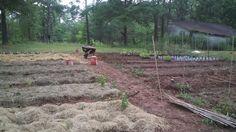Organic Vegetable Gardening Made Easy: 5. Growing Success: Planning